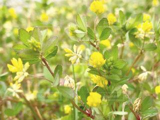 黄色の草花の写真・画像素材[1193608]