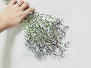 紫の花束を持った手 - No.1246834