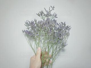 紫の花束を持った手の写真・画像素材[1246835]