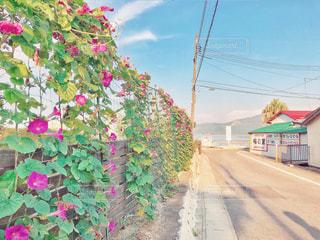 花の壁と海へ向かう道の写真・画像素材[1309865]