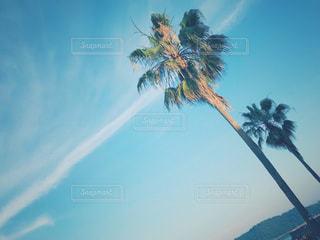 ヤシの木と青空の写真・画像素材[1318438]