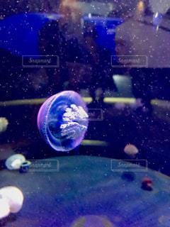 青色のクラゲの写真・画像素材[1393407]