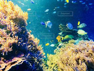 須磨水族館の熱帯魚①の写真・画像素材[1393415]