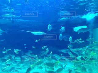 サメやエイのいるメインの水槽の写真・画像素材[1401076]