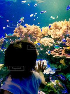 熱帯魚の水槽をみる赤ちゃんの写真・画像素材[1401157]