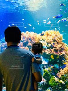 熱帯魚の水槽と親子の後ろ姿の写真・画像素材[1401158]