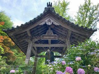 お寺の鐘と紫陽花の写真・画像素材[1425415]