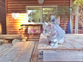 グレーのネコの写真・画像素材[1627415]