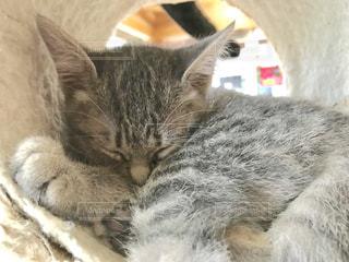 寝てる子猫の写真・画像素材[1627417]