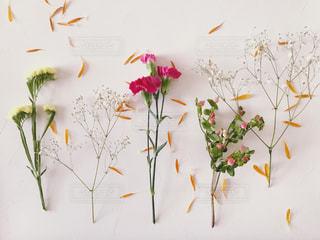 並べたカラフルな花の写真・画像素材[1687242]