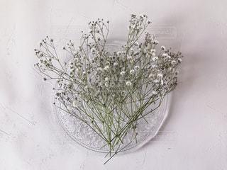 お皿に乗せたかすみ草の写真・画像素材[1752563]