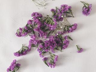 紫の小花の写真・画像素材[1752566]