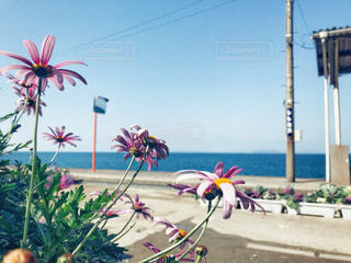 下灘駅に咲いてるお花から見た景色。の写真・画像素材[1841815]