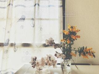 窓際に飾った桜とミモザの写真・画像素材[1874006]