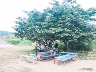 自転車とベンチと緑の写真・画像素材[2130092]