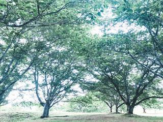 木のクローズアップの写真・画像素材[2130093]
