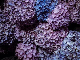 花のクローズアップの写真・画像素材[2264897]