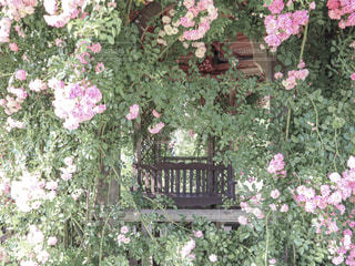 薔薇のガゼボの写真・画像素材[2392555]