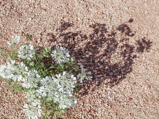 白い花のクローズアップの写真・画像素材[2392568]