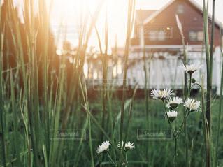 夕暮れ時の庭の写真・画像素材[2473124]