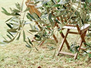 牛窓オリーブ園のベンチの写真・画像素材[2489054]