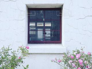 ピンクの薔薇と窓の写真・画像素材[2819577]