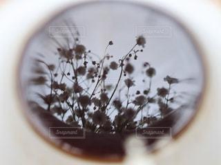 コーヒーに写ったかすみ草の写真・画像素材[2867529]