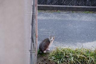 猫が好きの写真・画像素材[306927]