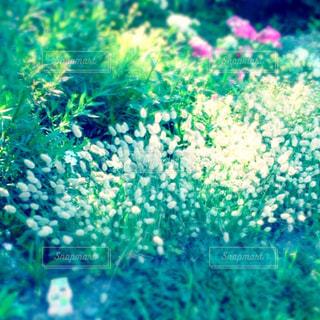 花の写真・画像素材[257886]