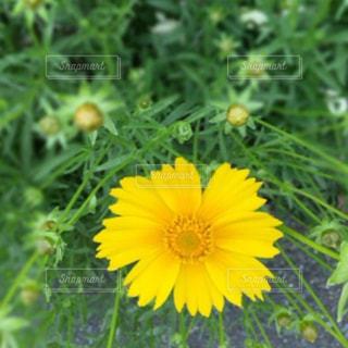 自然の写真・画像素材[257887]