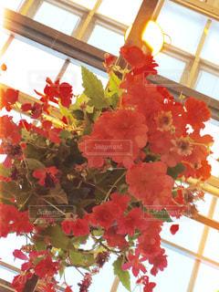 花の写真・画像素材[257966]