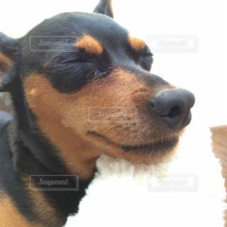 犬 - No.258251