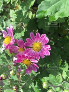 花の写真・画像素材[258442]