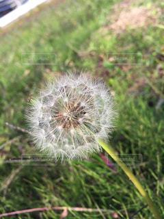 花の写真・画像素材[259603]