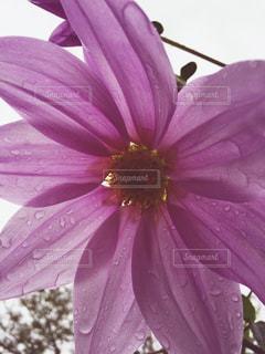 花の写真・画像素材[267006]