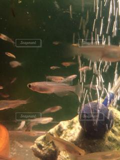 魚の写真・画像素材[269228]