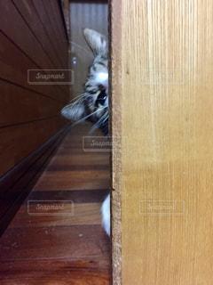 猫の写真・画像素材[315746]