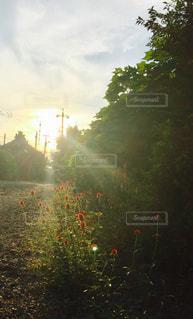 光を浴びての写真・画像素材[726621]