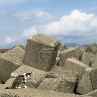 猫の写真・画像素材[257897]