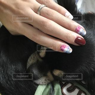 犬の写真・画像素材[258207]
