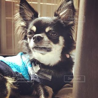 犬の写真・画像素材[258209]