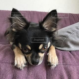 犬 - No.258210