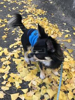 犬の写真・画像素材[258882]