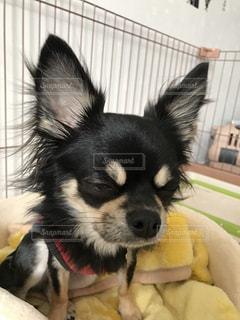 犬 - No.260257