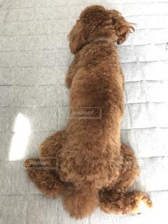 犬の写真・画像素材[260258]