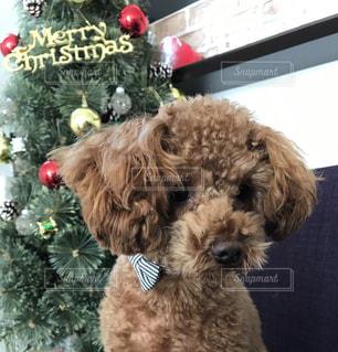 犬の写真・画像素材[260259]
