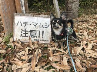 犬の写真・画像素材[266603]