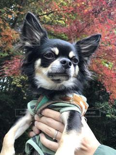 犬の写真・画像素材[266604]