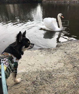 No.266605 犬