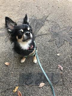 犬 - No.266607